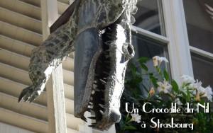 Crocodile Strasbourg KurioCity